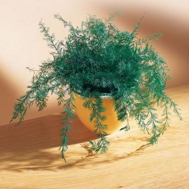 sedao vente anti nuisibles animaux plante repousse insectes. Black Bedroom Furniture Sets. Home Design Ideas