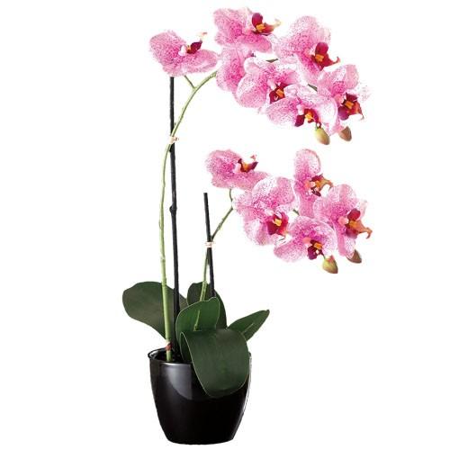 sedao vente art de la table d co orchid e ternelle. Black Bedroom Furniture Sets. Home Design Ideas