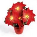 Poinsettia «éternel» lumineux