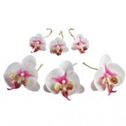 Fleurs d'orchidées «éternelles» - les 6